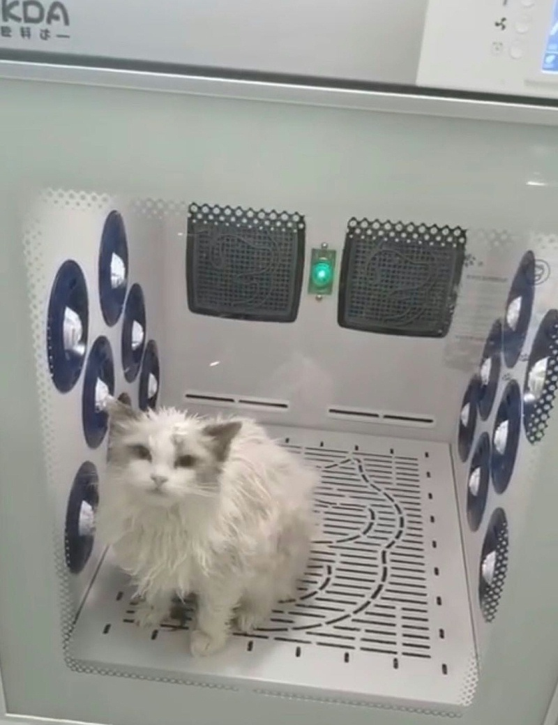 给主子吹毛,就选欧科达宠物烘干箱