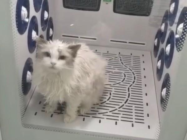 给猫咪吹毛不可佛系!选欧科达宠物烘干箱,还能做SPA!!