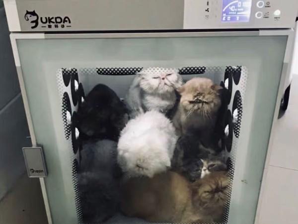 """多猫家庭必备丨""""哇哦!""""这款宠物烘干箱,怎么这么好用???"""