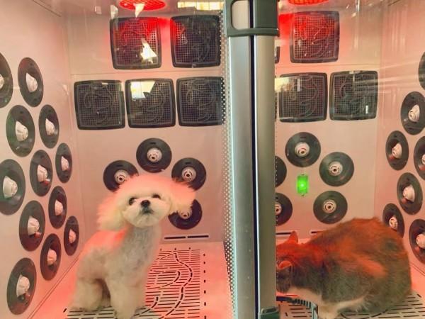 自带spa的宠物烘干机!5面出风,静音降噪,简直就是宠物的福音!
