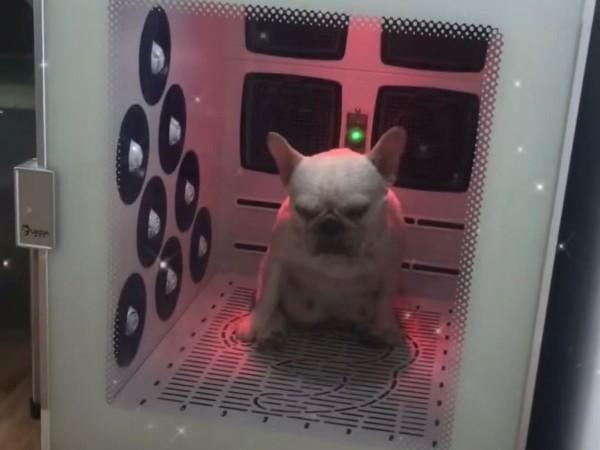 千挑万选,终于找到了一款多功能、高性价比的宠物烘干箱!