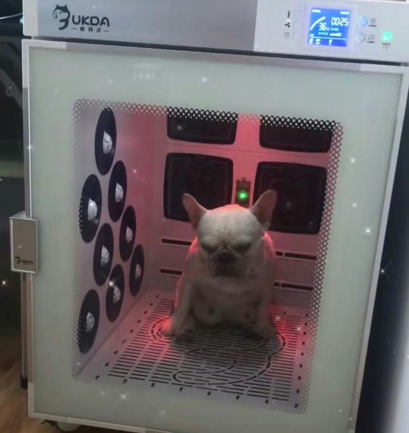 狗狗 欧科达宠物烘干机