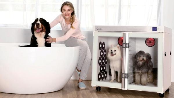 宠物烘干机:新手必知宠物狗多久洗澡一次