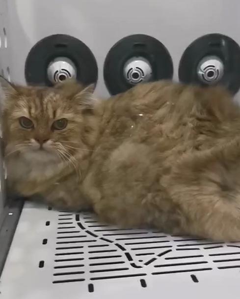 哪个牌子的宠物烘干机性价比高-欧科达宠物烘干机