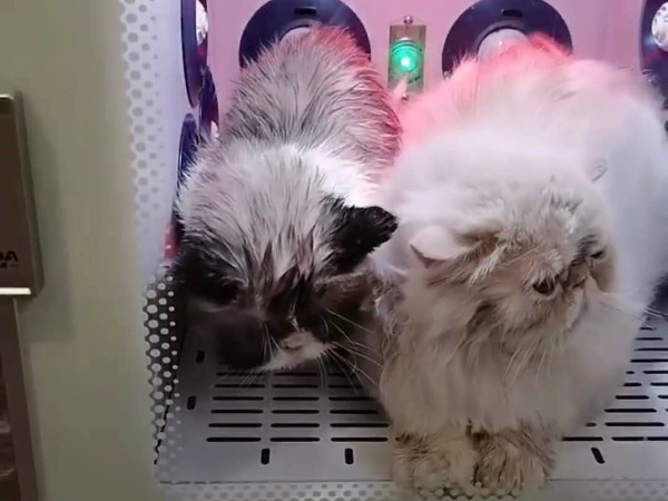 【宠物护理好帮手】欧科达宠物护理烘干机