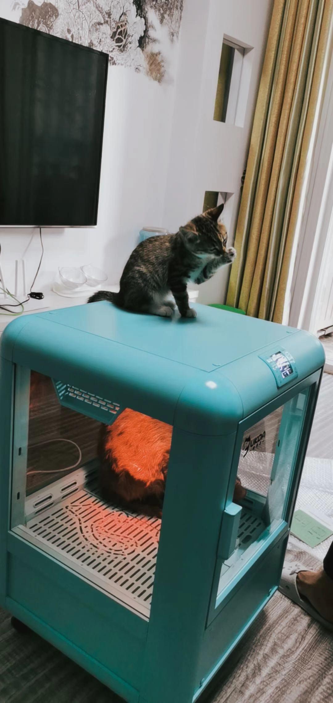 让猫咪爱上洗澡的宠物烘干机,吹干快还静音!