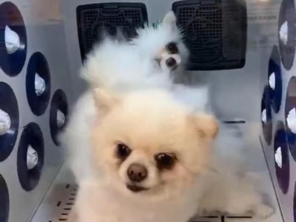 烘干、护理、香薰......一台狗狗烘干机,竟有这么多功能?!