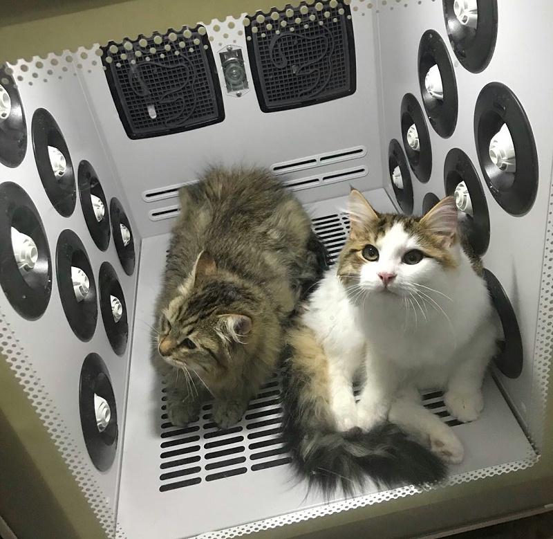 猫咪 欧科达宠物烘干箱