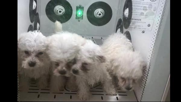欧科达宠物烘干机:不是吹干就行,要吹好才行!