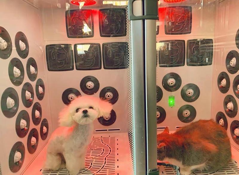 降音降噪、丝柏精油、缓解宠物紧张情绪