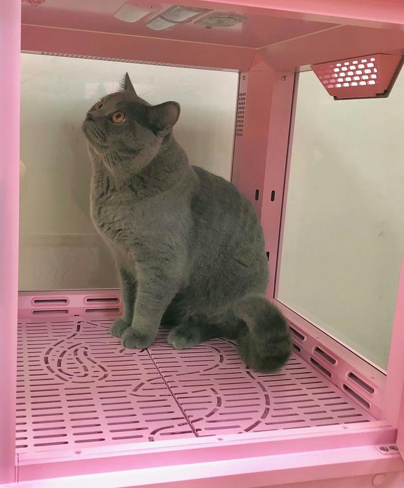 猫主子 欧科达宠物烘干箱