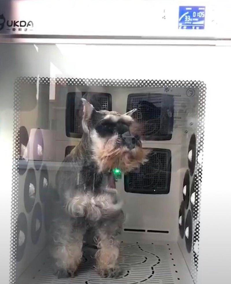 宠物狗 宠物烘干机 欧科达