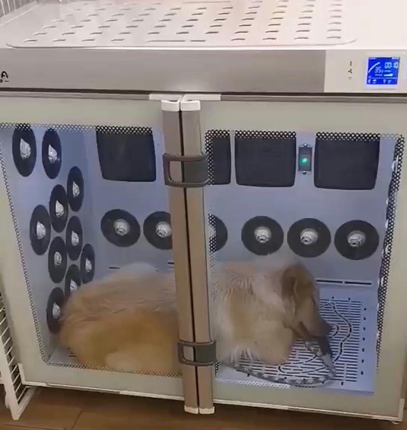 """宠物烘干机丨告别""""手动吹干"""",360°全方位出风,快干不伤毛发!"""