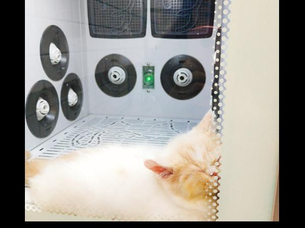 宠物烘干箱哪个牌子好丨欧科达UKDA