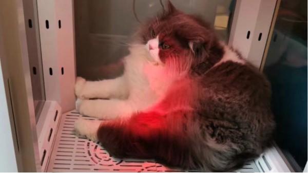 宠物烘干箱丨3C认证,烘干、护理还能当猫窝,铲屎官的安心之选!