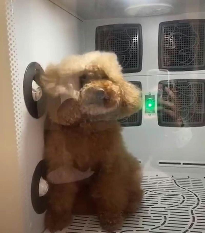 让狗狗爱上洗澡的宠物烘干机,静音又舒适!