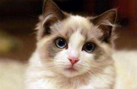 猫咪吹毛 欧科达宠物烘干机